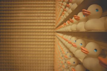 Designecologist_lined-up-of-rubber-duck-on-shelf-1751277
